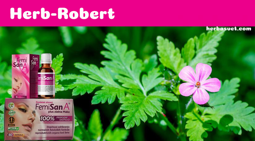 Herb Robert, Our Super-Hero